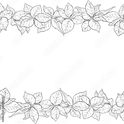 Hand drawn seamless border with foliage of rose