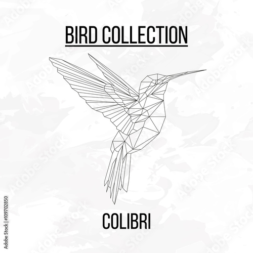 Colibri bird geometric lines silhouette isolated on white