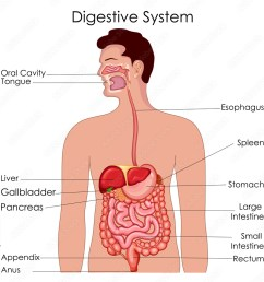fotografie obraz medical education chart of biology for digestive system diagram posters cz [ 1000 x 1000 Pixel ]