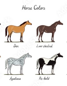 Horse color chart set equine coat colors with text types of horses black also rh stockobe
