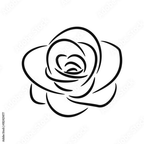 vector line rose sketch
