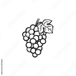 Vector hand drawn Bunch of grapes outline doodle icon Bunch of grapes sketch illustration for print web mobile and infographics isolated on white background Buy this stock vector and explore similar