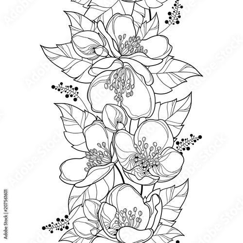 Vector seamless pattern with outline Jasmine flower bunch