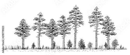 forests are the wild other in many stories, acting as borders, sources of mystery and sources of resources and are key to any world map. Woods Drawing Vintage Like Illustration Of Pine Forest Trees Silhouettes In Line On White Background Stock Vector Adobe Stock