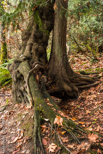 Tree Burls For Sale