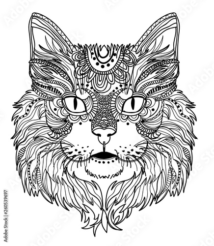 The head of a cat. Fluffy kitten. Drawing manually in