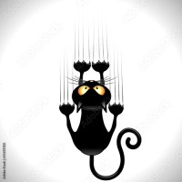 Black Cats Attack!