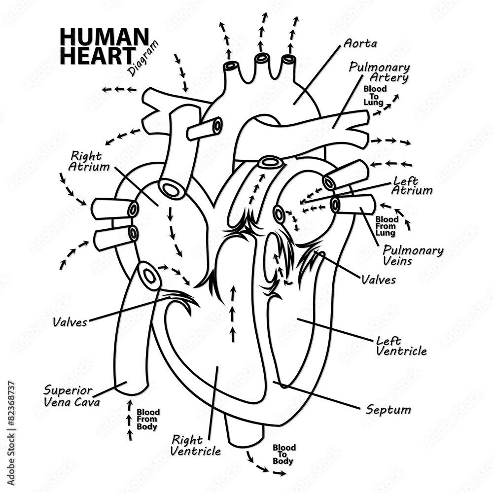 hight resolution of tattoo diagram