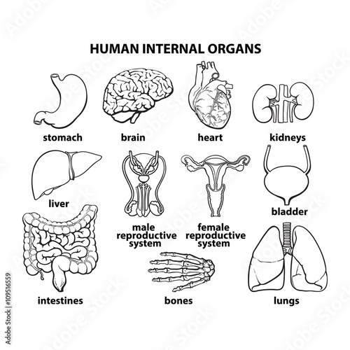 set of human organs, different human entrails, black and