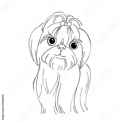 vector monochrome contour illustration of shih tzu dog