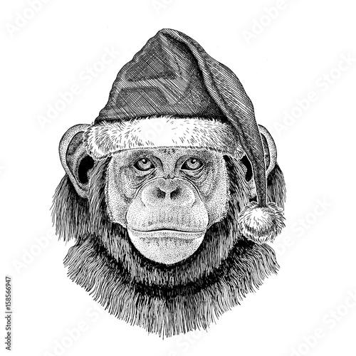 chimpanzee monkey wearing christmas