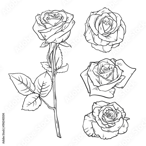 Vector Black and white version set of rose. Realistic hand