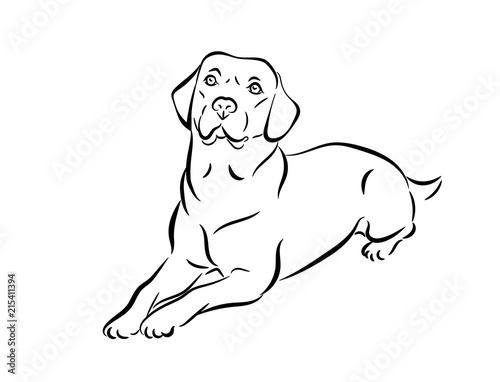 Labrador vector illustration. Black and white outline of a