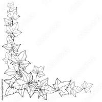 Vector corner bunch with outline Ivy or Hedera leaves ...