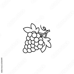 Vector outline grape logo design template Concept design element and icon in linear style grapes isolated cartoon illustration Buy this stock vector and explore similar vectors at Adobe Stock Adobe Stock