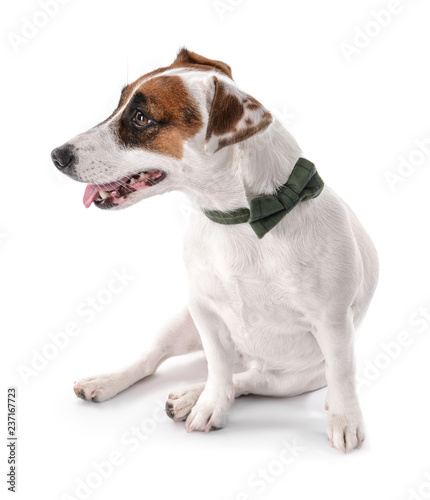 Funny Dog White Background