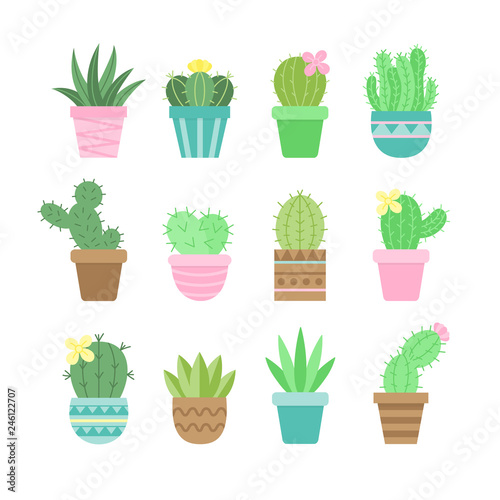 cute cactus set different