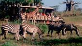 Kilimanjaro Safaris®
