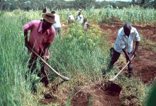Photo of Peasant farmers 'robbed'