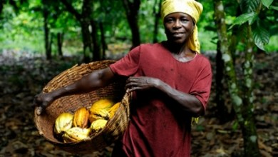 Photo of Cocoa farmers in Ghana to get 21% pay rise