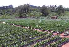 Minerals Commission seedlings