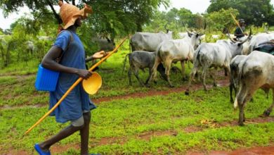 Photo of Fulanis must do more than cattle rearing, leader tells community