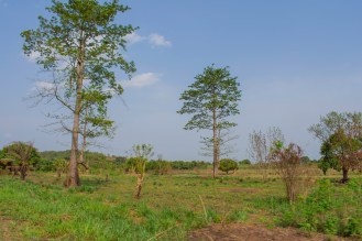 The landscape of Ghana's countryside