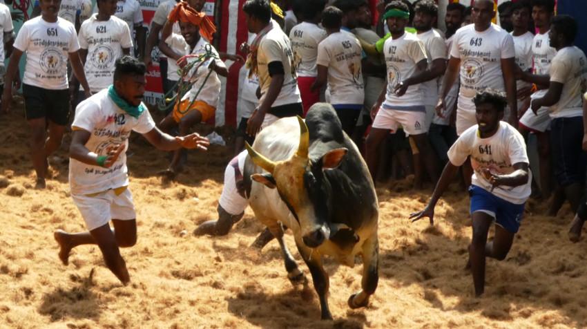 Dos chicos acechando al toro