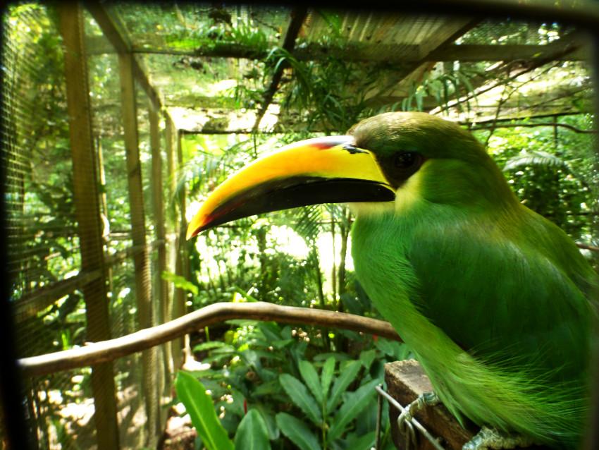 Parque de aves - Copan Ruinas