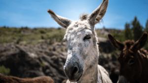 Trekking Annapurna - Monos Burros - Destacada