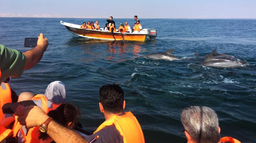 qué ver en Irán - Delfines - Hengam