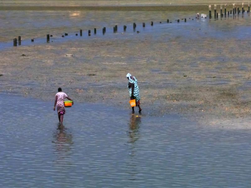 Mujeres pescando berberechos