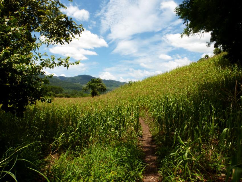 Copán Ruinas - Camino a La Pintada