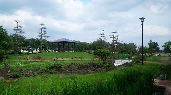06-15-あやめ公園-002