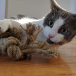 Hemp Rope Toy CAT