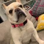 Hemp Dog Pink Collar