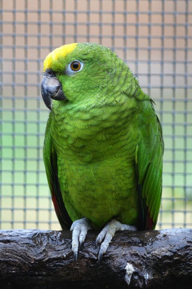 Ballarat Aviary 3