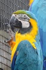 Ballarat Aviary 6