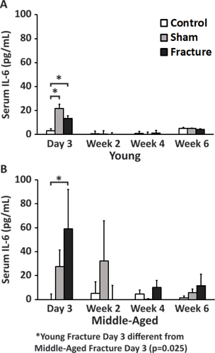 Age Dependence of Systemic Bone Loss and Recovery