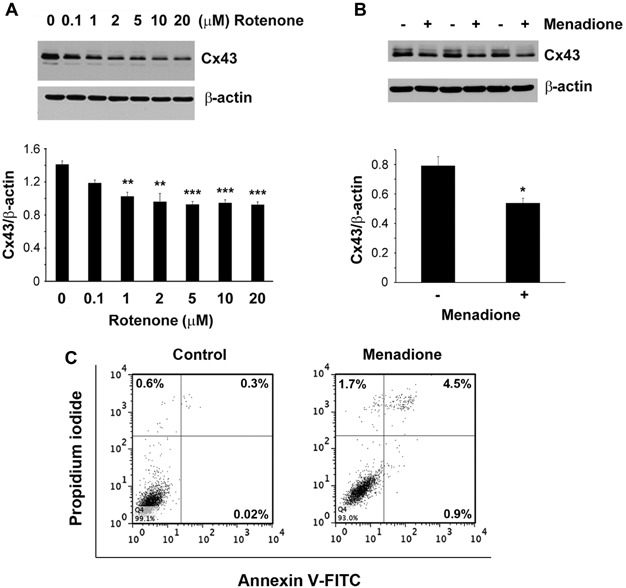 Connexin 43 Channels Protect Osteocytes Against Oxidative