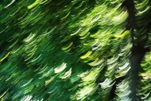 EMDR - Imagen difuminada de un árbol