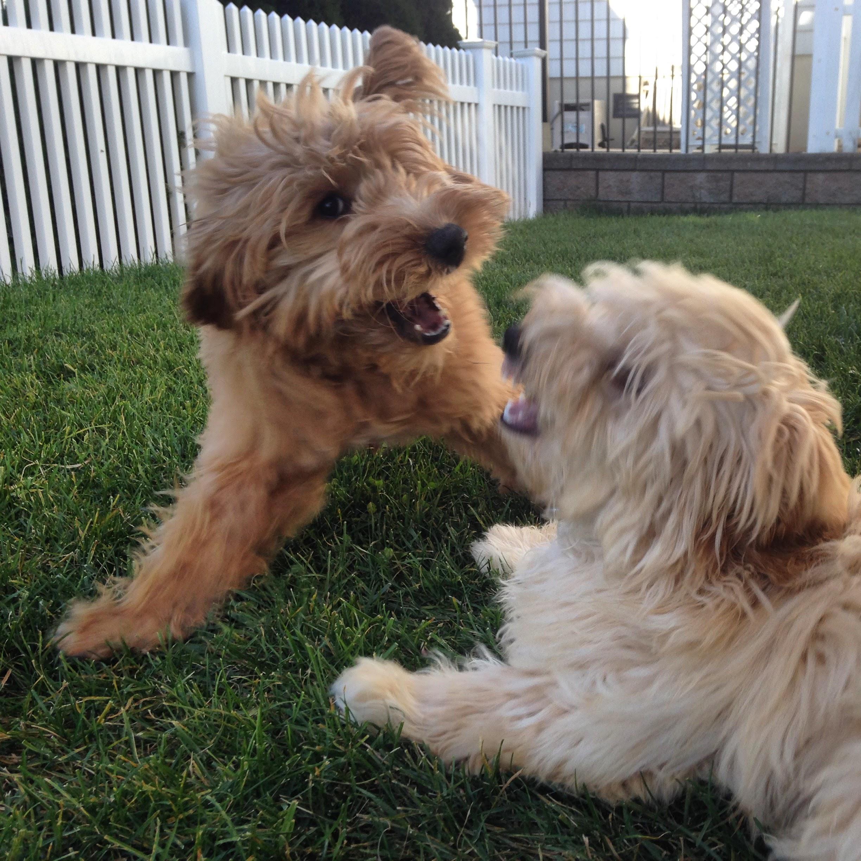 Saylor and Tillie