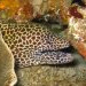 murene-leopard