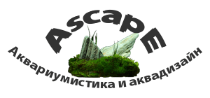 Ascape - аквариумистика и аквадизайн