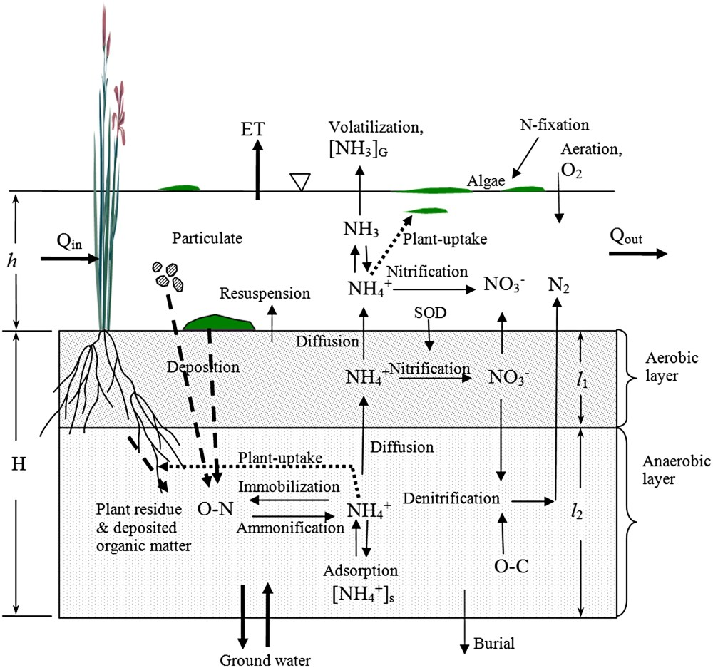 medium resolution of nutrient dynamics in flooded wetlands i model development journal of hydrologic engineering vol 18 no 12