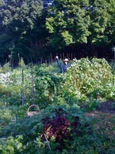 Bluestone Farm