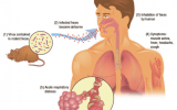 Know More About The Hantavirus In China And How Hantavirus Spread