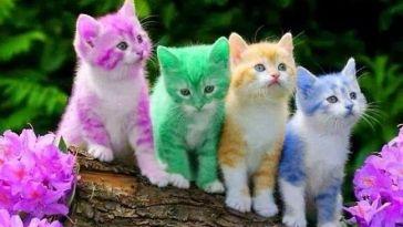 Kevin Folta Cats