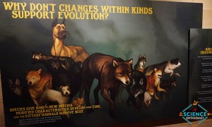 Ark Encounter Changes Within Kinds