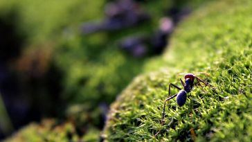 Ant on mosshill02